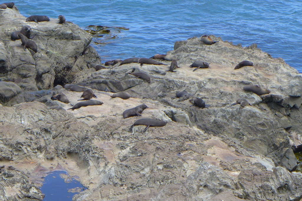 Oahu Seal Colony