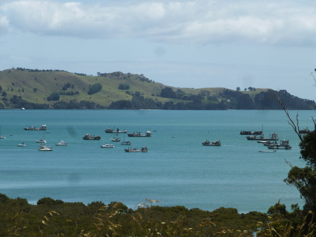 Fishing Boats Out On Coramandel