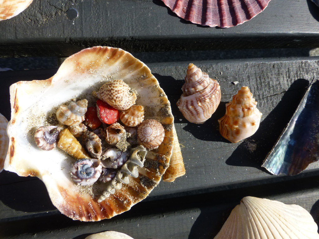 Shells from Waipu Cove