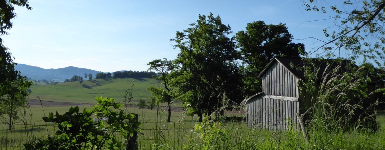 EdgewiseWoods, Gardens and Critters