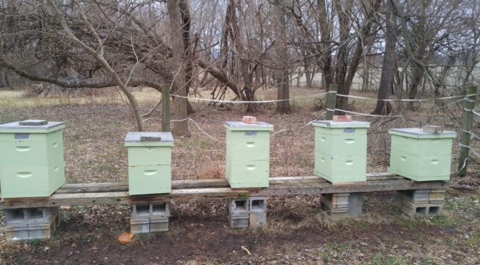 Hives in Winter