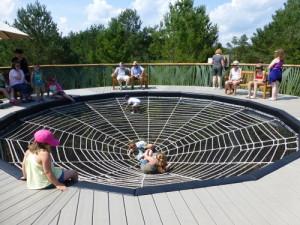 Spider Web on Wild Walk