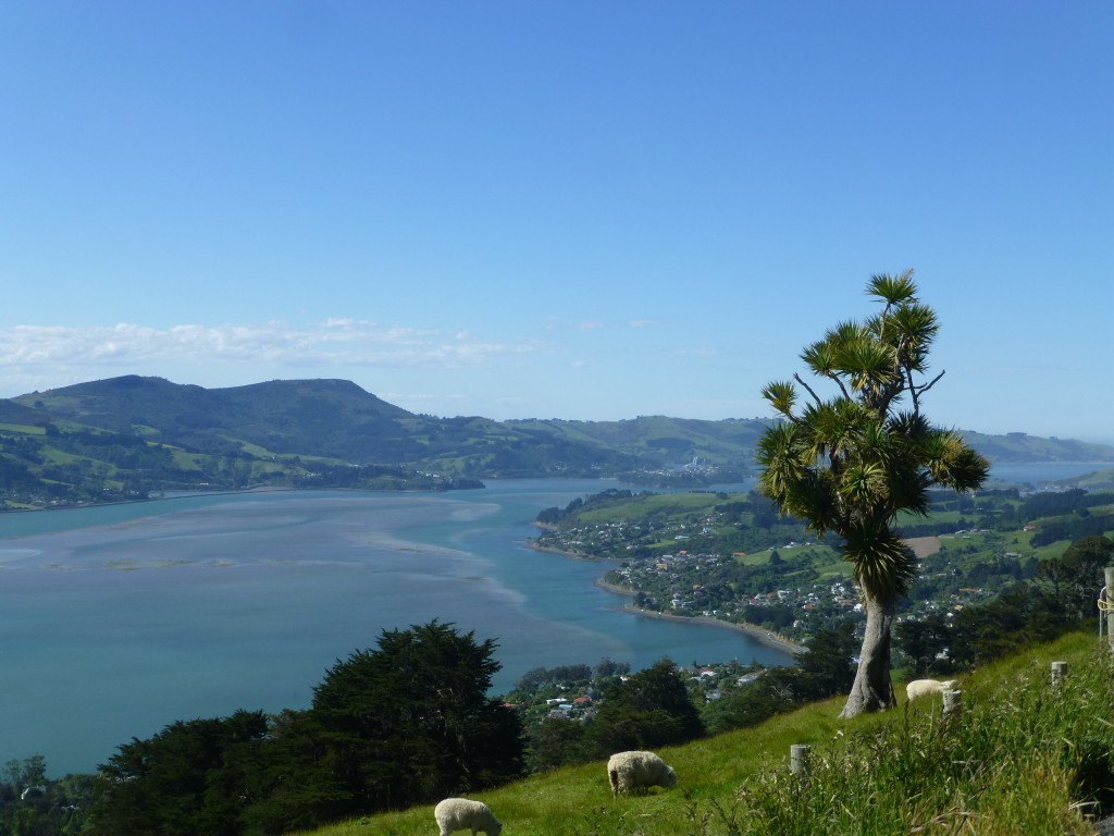 Harbour at Dunedin, Otago Peninsula