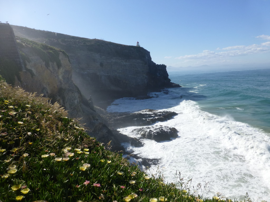 Otago Light ans Albatross Cliffs