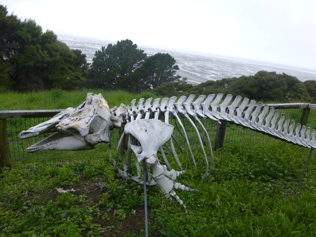 Random Marine Skeleton at Old Visitors Center