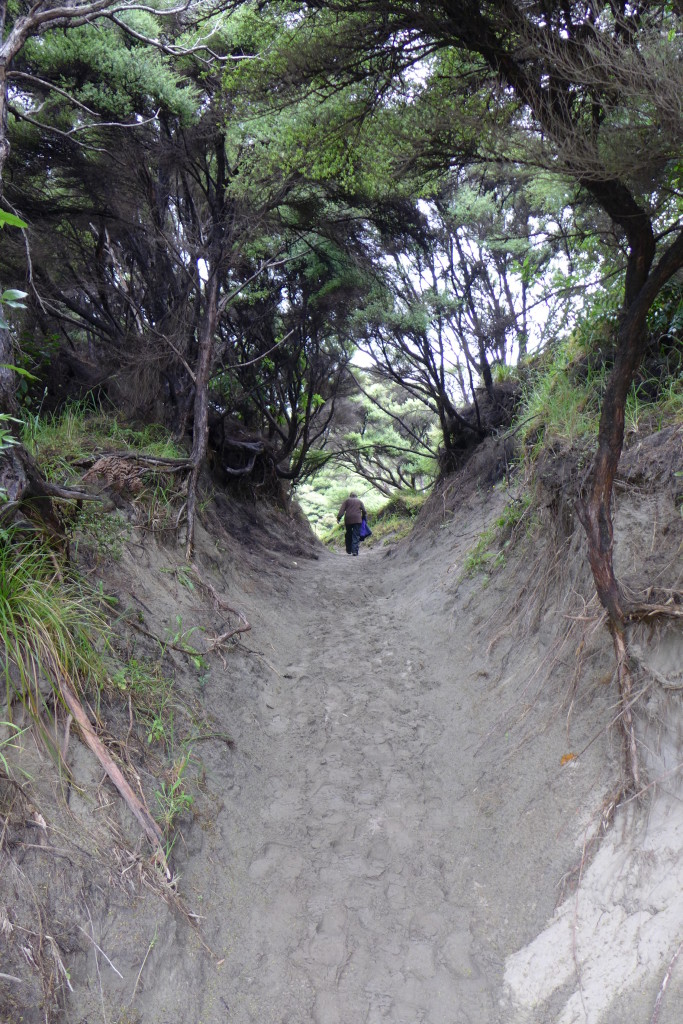 Sand Dune Tunnel Trail
