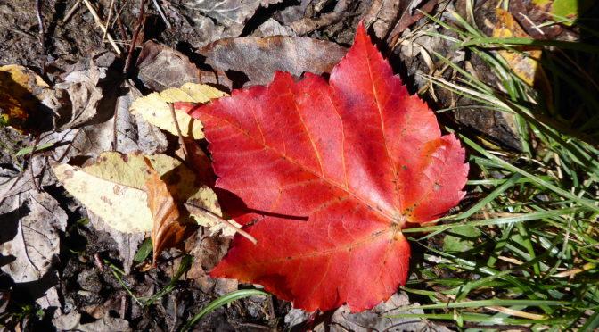Spruce Knob West Virginia