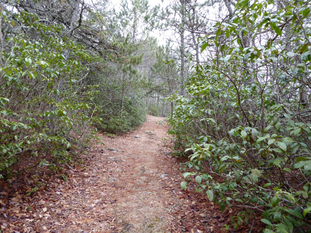 Laurel Trail
