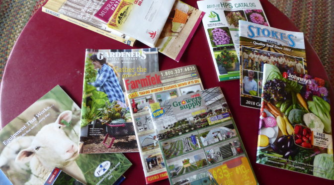 Winter Seed Catalogs